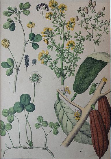 Botanicals Germany IV 1865 Hand Coloured Lithographs