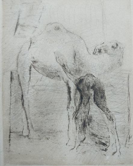 Camel - Fritz Wrampe German Original etchings of Animals. Circa 1930