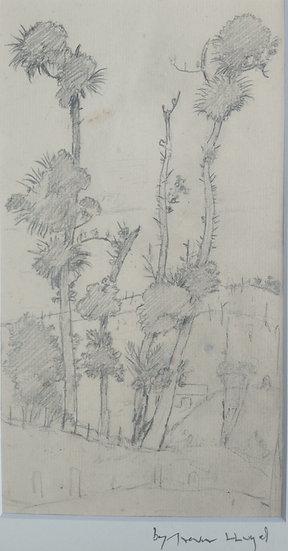 Original Trevor Lloyd drawing C.1920 - Pencil Sketch Kauri Trees