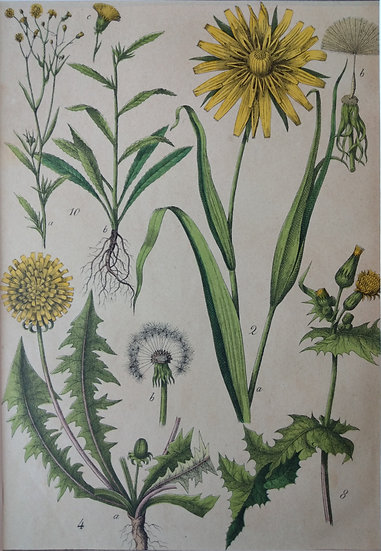 Botanicals Germany II 1865 Hand Coloured Lithographs