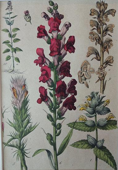 Botanicals Germany VI 1865 Hand Coloured Lithographs