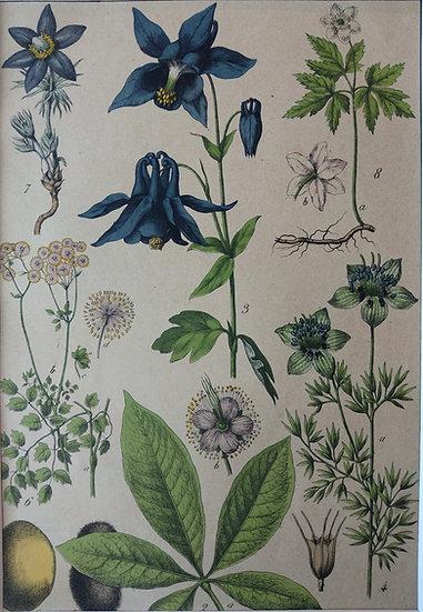 Botanicals Germany I 1865 Hand Coloured Lithographs