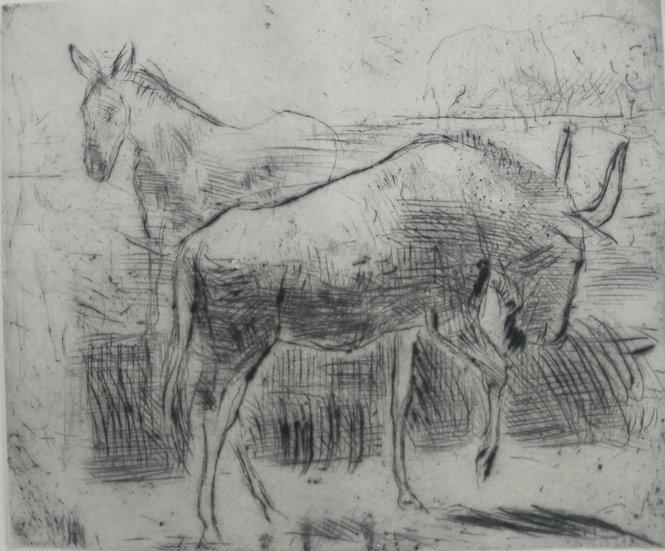 Bull and donkey - Fritz Wrampe German Original etchings of Animals. Circa 1930
