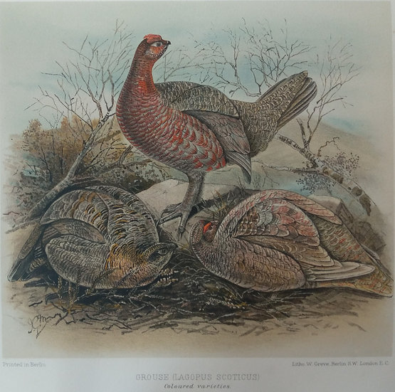 Grouse Chromolithograph - Coloured Varieties