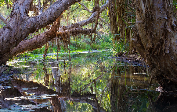 """K11 """"Reflections in an Oasis"""" by Sue Williamson"""