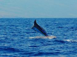 hawaiian marlin charters