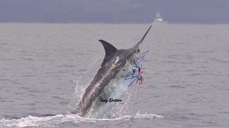 top fishing charter