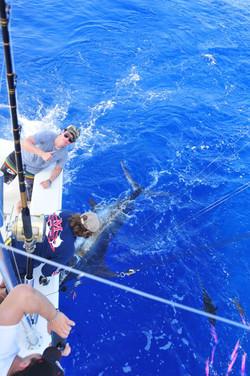 blue marlin fishing charters hawaii