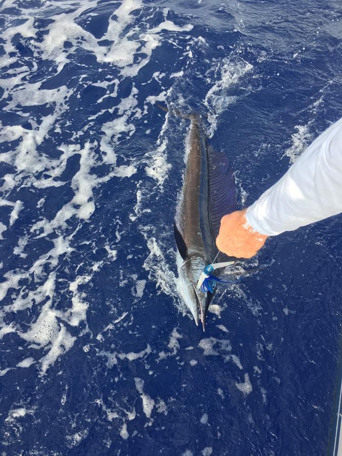 Good fishing continues