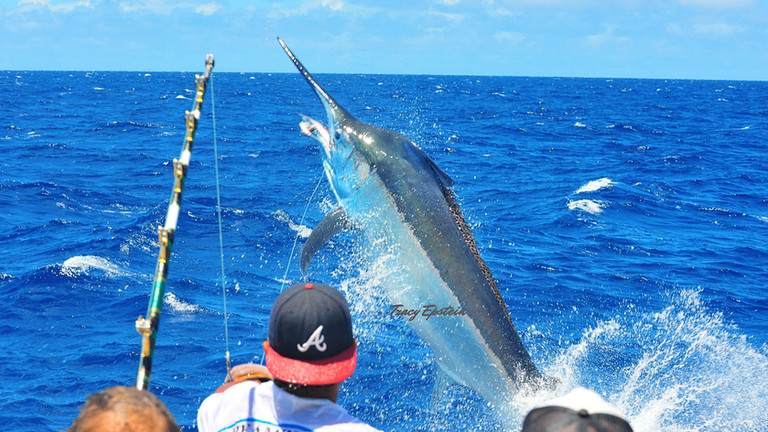 best kona fishing charters