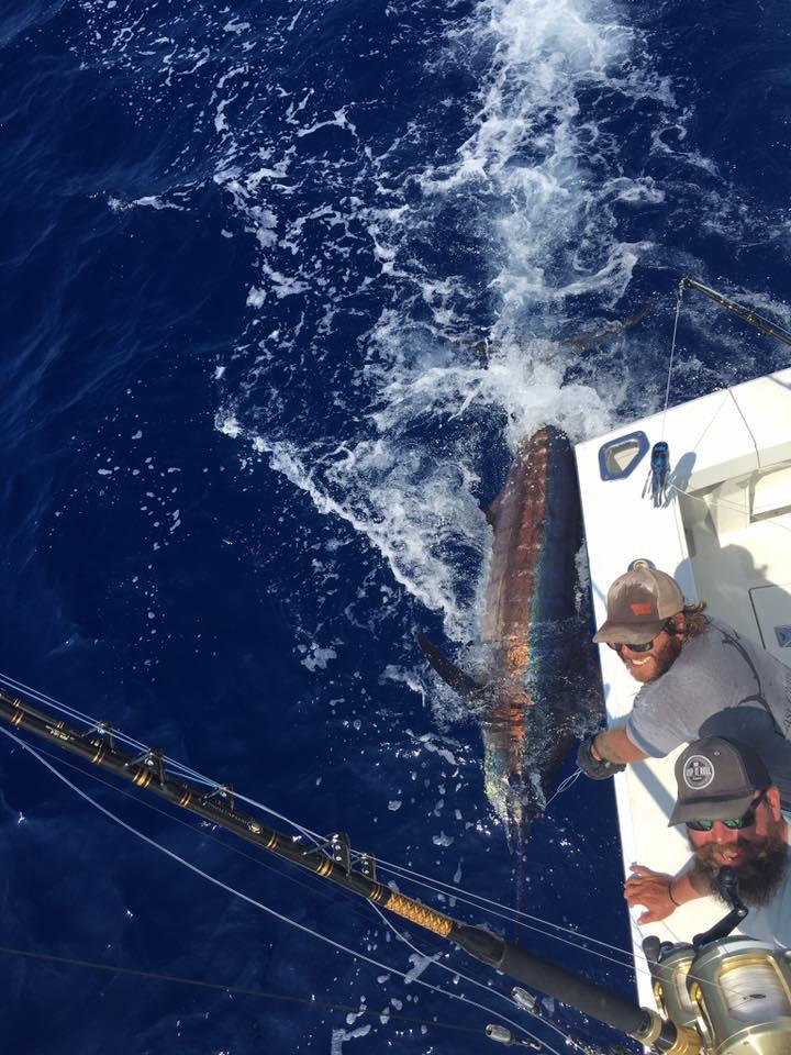 Last Chance Sport Fishing Kona Hawaii blue marlin