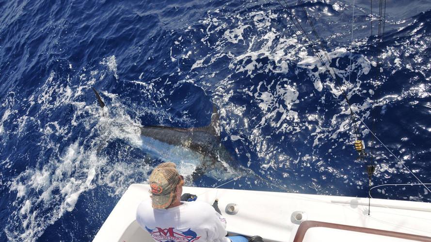 marlin fishing charter