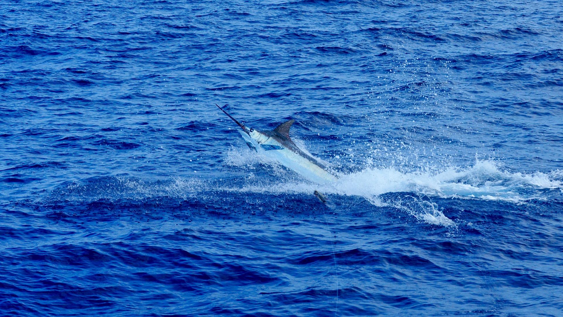 kona sportfishing