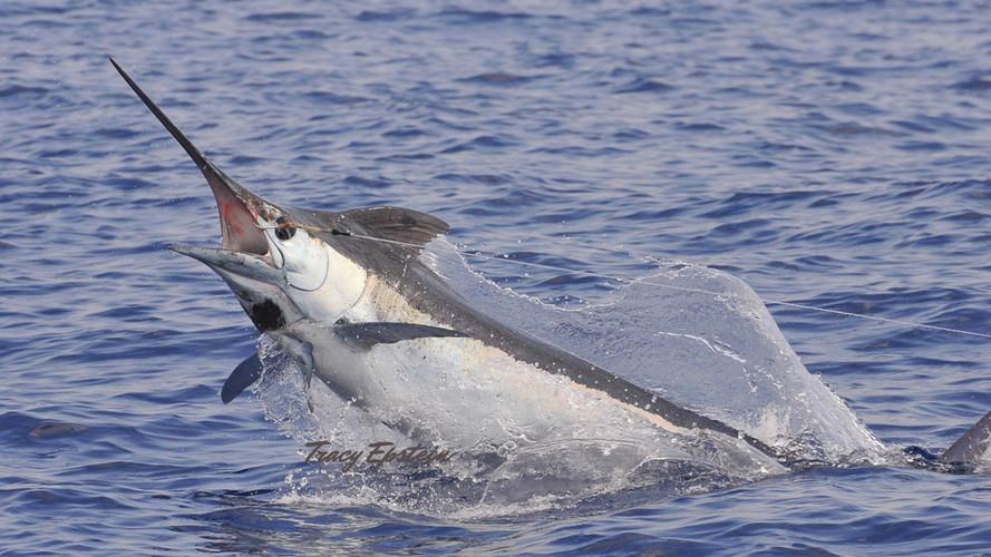 hawaii deepsea fishing