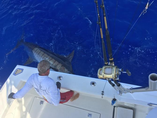 Phenomenal fishing continues