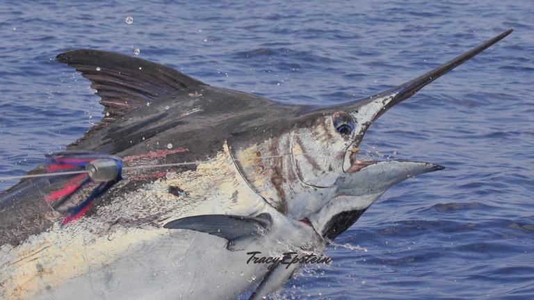 kona deepsea fishing