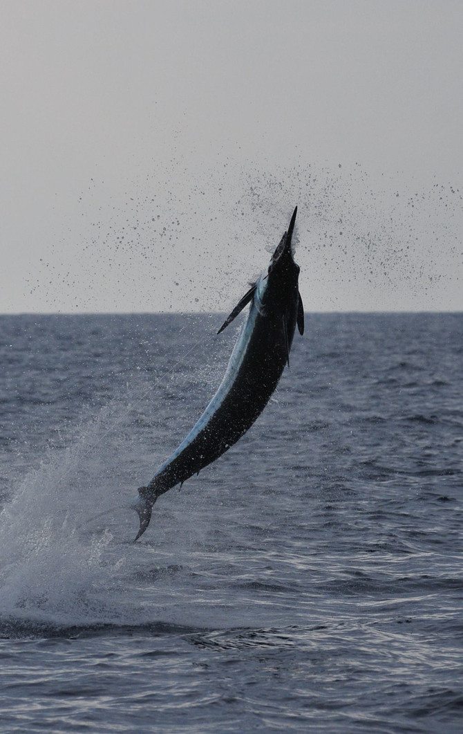 1/4 on blues today and a 150 ahi was good enough to take the first daily in the kona shoot out. Two