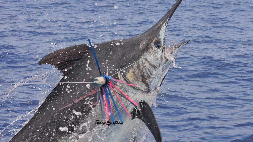 kona deep sea fishing