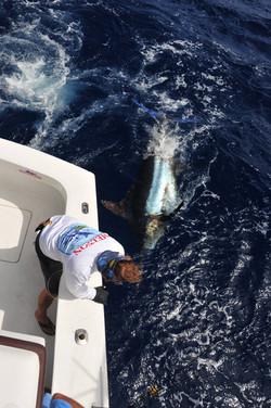 blue marlin fishing charter