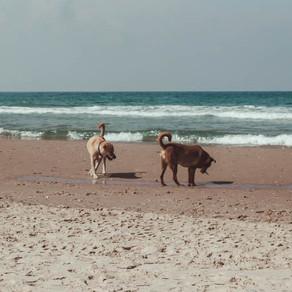It's a dog's life in Tel Aviv