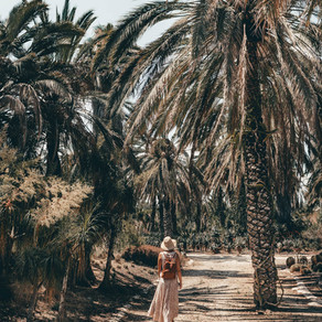 Cactus paradise: discover Tel Aviv's most hidden gem