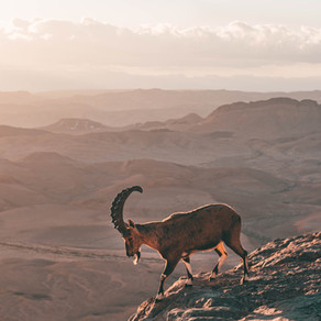 A photography guide to Mitzpe Ramon: most Instagrammable places