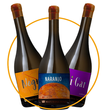 Combo Maturana Wines é na Vinhos do Mundo