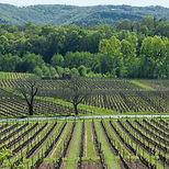 vin-cayx-danemark.jpg