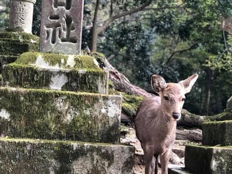 奈良にて観光案内