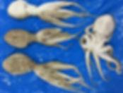 Octopus- Vighneshwara Enterprise