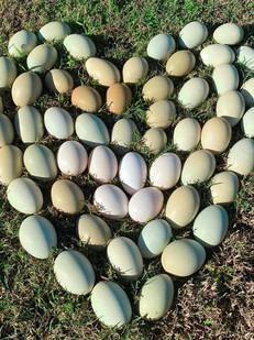 Rock Chic Eggs