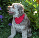 bandana-petit-chien-tissu-recycle