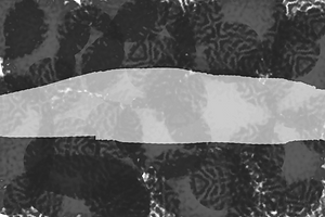 zebra print vector, monochrome print, striped, stripes,