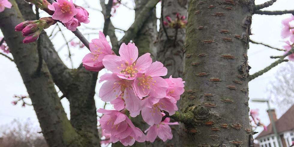 Mindfulness Refresher Class  - Blossom & Grow