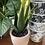 Thumbnail:  Aloe Vera  In a terracotta pot( faux plant )