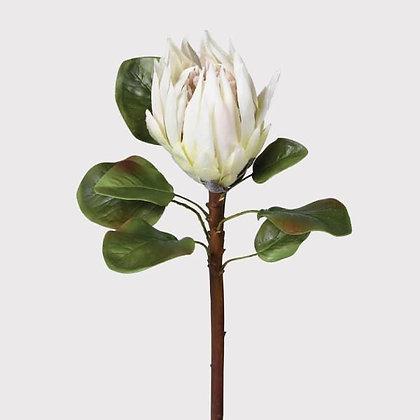 Protea white Large