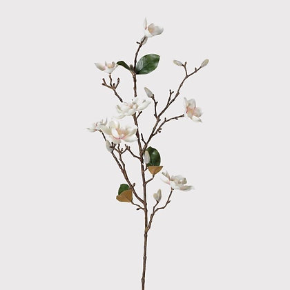 Magnolia branch with flowers &buds
