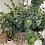 Thumbnail: Eucalyptus stem long BB