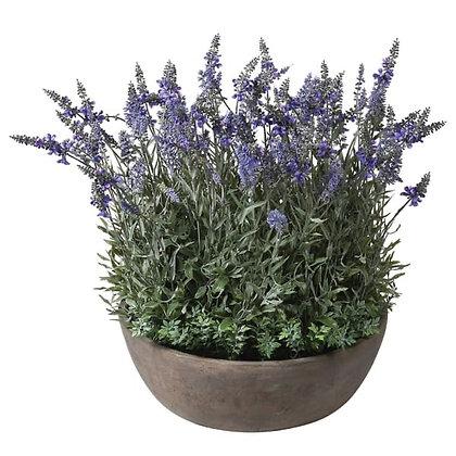 Large bowl of Lavender