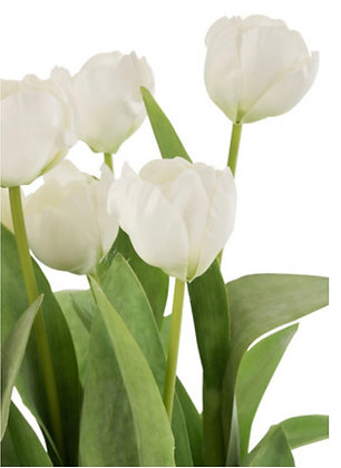 White Tulips in cement pot