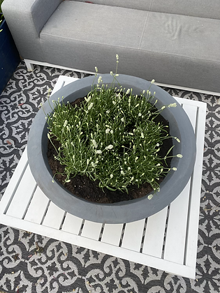 Wide charcoal  low planter
