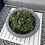Thumbnail: Wide charcoal  low planter