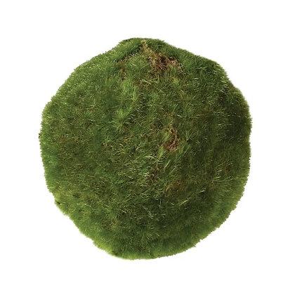 Moss Ball  large