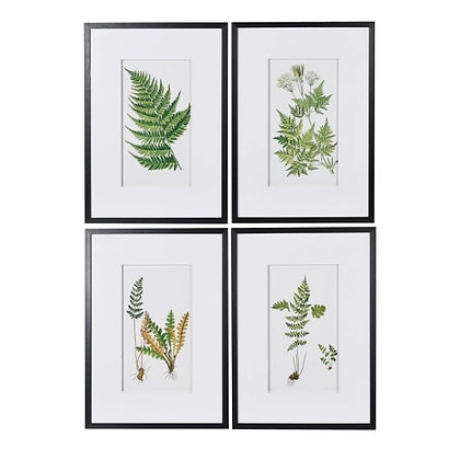 Fern pictures x 4