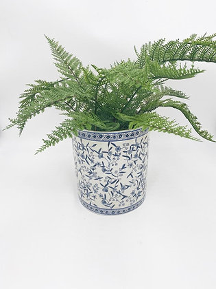 Fern with pot