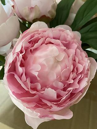 Pink peonies in glass Vase