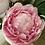 Thumbnail: Pink peonies in glass Vase