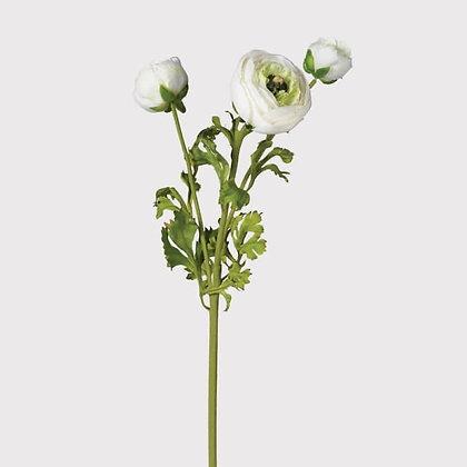 White Ranuncula stem life like