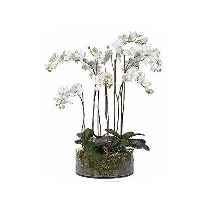 Large white phalaenopsis orchid in glass cyclinder bowl
