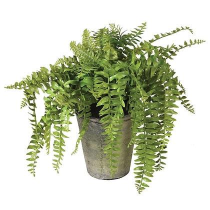 Fern Plant in Pot